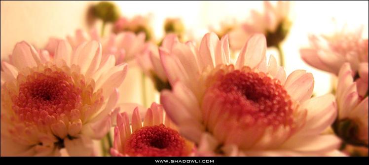 http://shadowli.com/images/daisy_00.jpg